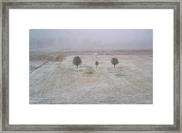 Trees In Snowstorm Framed Print