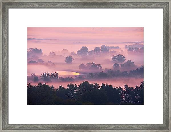 Framed Print featuring the photograph Trees In The Mist by Whitney Goodey