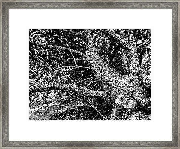Trees, Leaning Framed Print