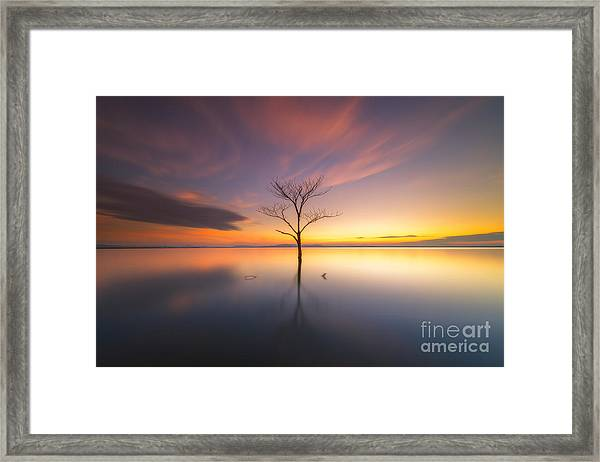 Trees Submerged In The Flooded The Time Framed Print