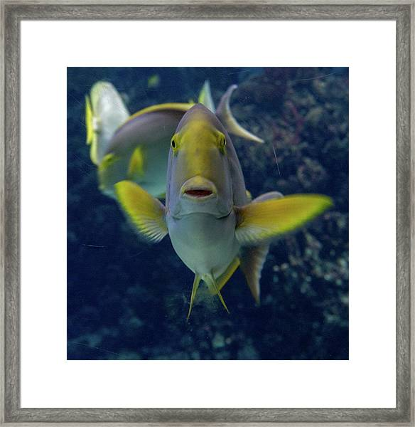 Framed Print featuring the photograph Tropical Fish Poses. by Anjo Ten Kate