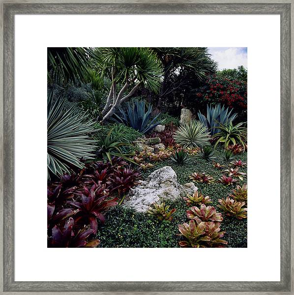 Tropical Garden, West Palm Beach, Fl Framed Print