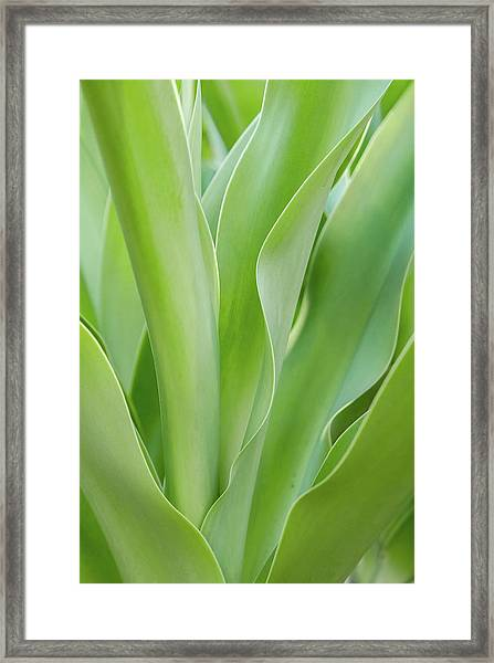 Tropical Leaf Framed Print