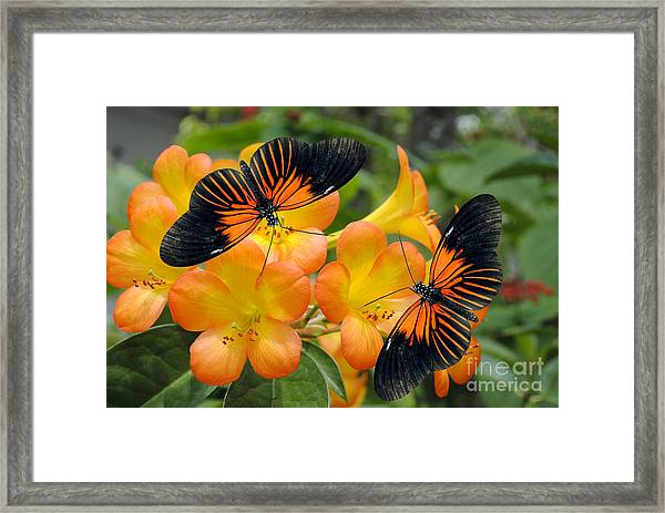 Tropical Rhododendron Simbu Sunset Framed Print