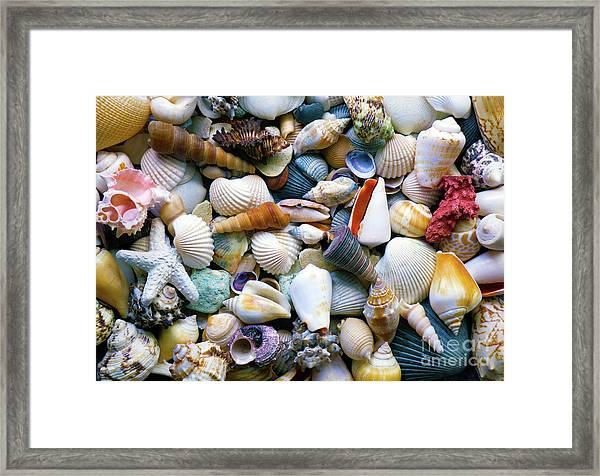 Framed Print featuring the photograph Tropical Treasure Seashells A91218 by Mas Art Studio
