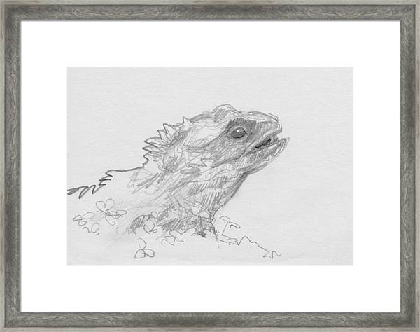 Tuatara Framed Print