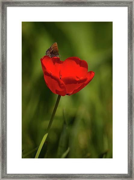 Tulip And Skipper Framed Print