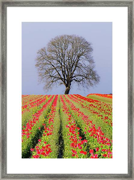 Tulips & Tree Silhouette Framed Print