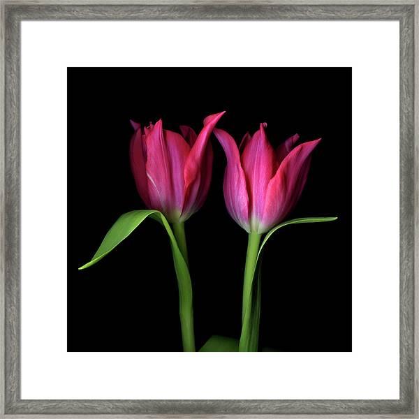 Tulips Flower Framed Print