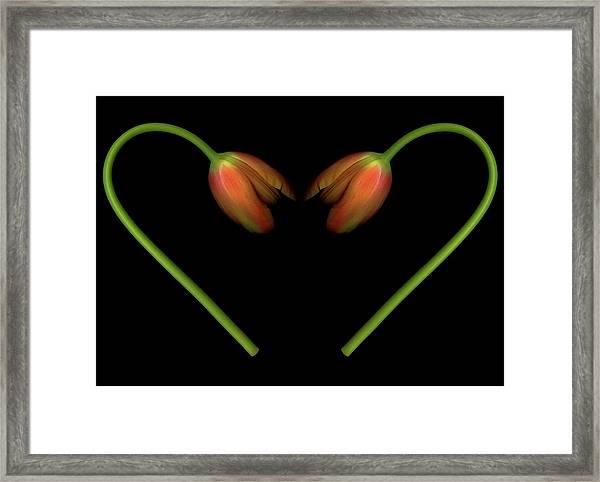 Tulips In Shape Of Heart Framed Print