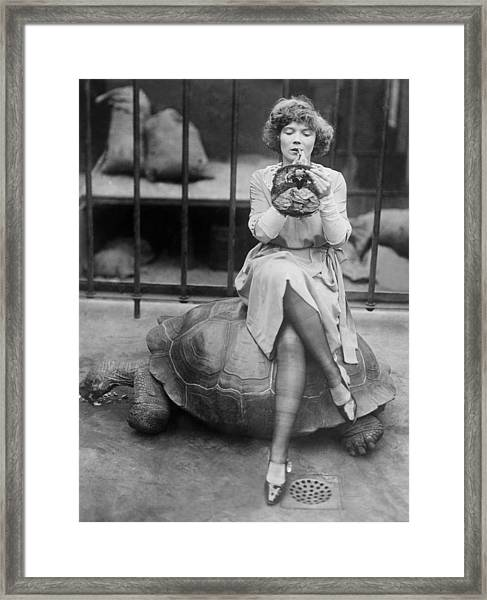 Turtle And Make-up Framed Print