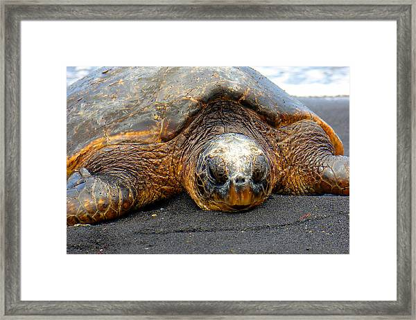 Turtle Rest Stop Framed Print