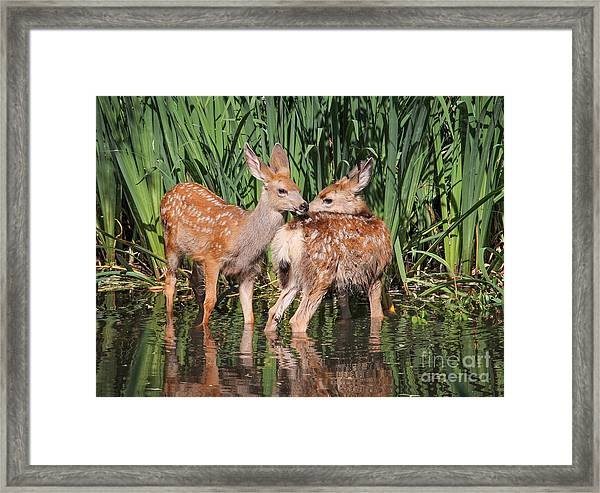 Twin Fawns Nuzzling Each Other In A Framed Print