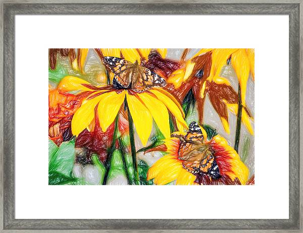 Twin Painted Lady Butterflies Pencil Framed Print
