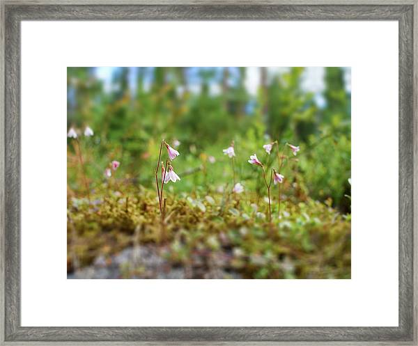 Twinflower Forest Framed Print