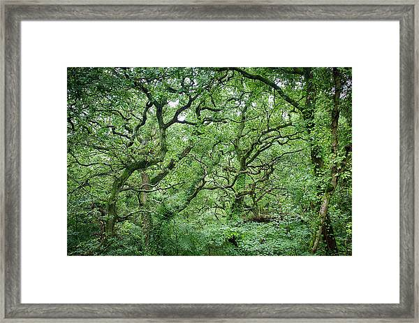 Twisted Forest Full Color Framed Print