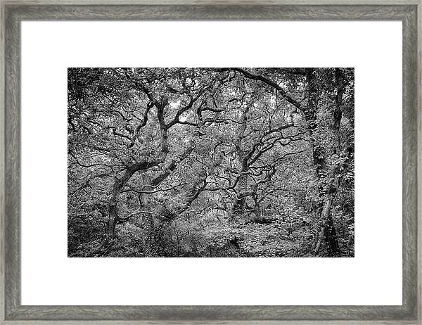 Twisted Forest Framed Print