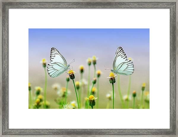 Two Butterflies Framed Print