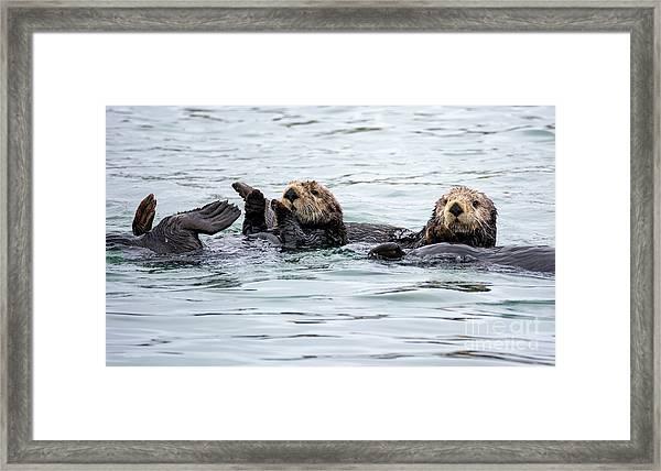 Two Cute Sea Otters Grooming Framed Print