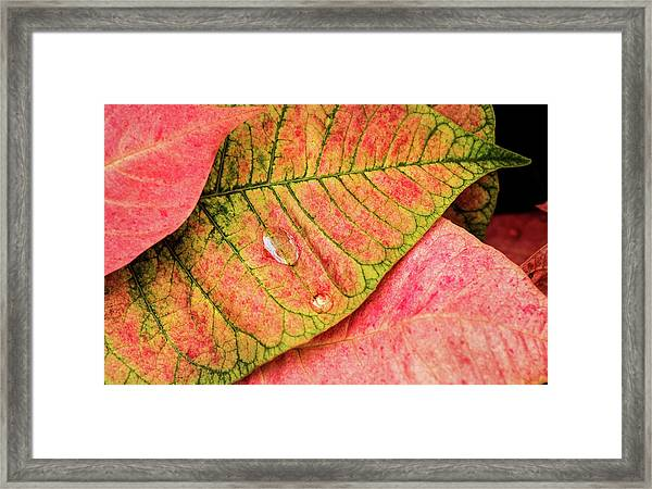 Two Drops Framed Print