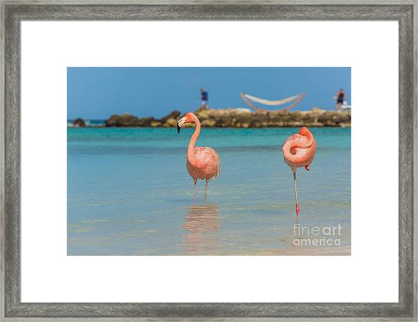 Two Flamingos On The Beach Framed Print