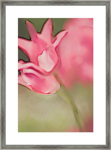 Two Pink Lily Flowering Tulips Framed Print by Maria Mosolova