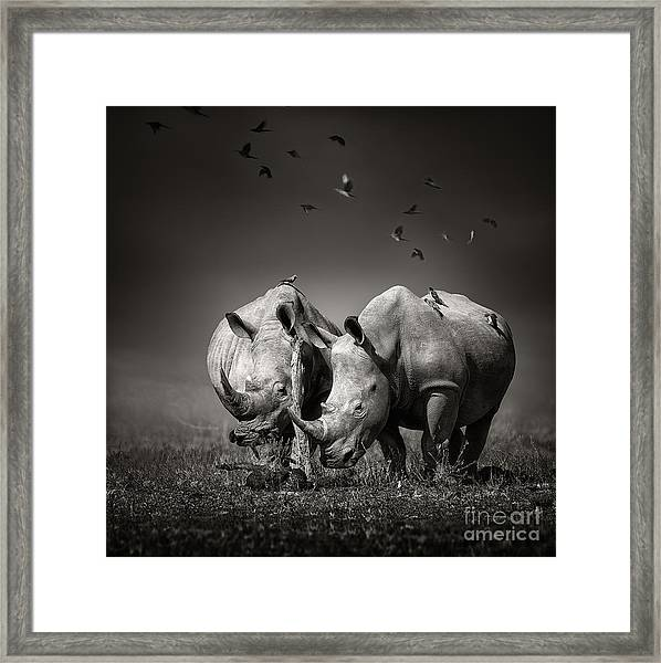 Two White Rhinoceros In The Field With Framed Print