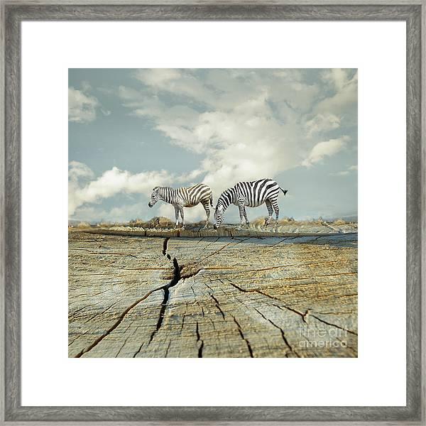 Two Zebras In A Surreal Landscape Framed Print