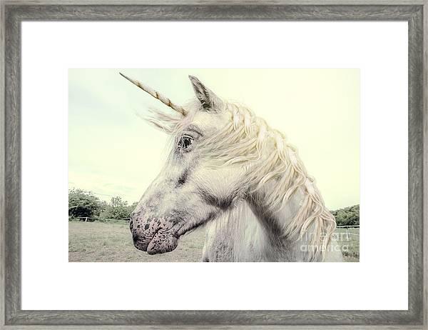 Unicorn Photography Realistic Framed Print