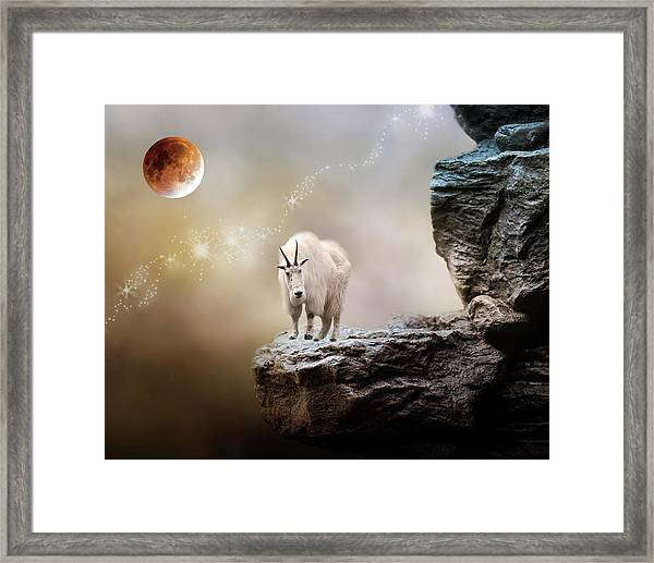 Up High Framed Print