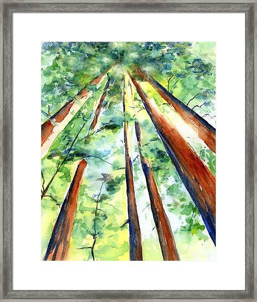 Up Through The Redwoods Framed Print