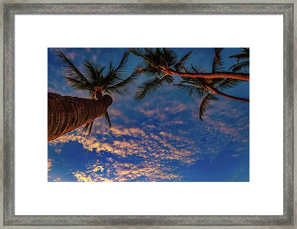 Upward Look Framed Print