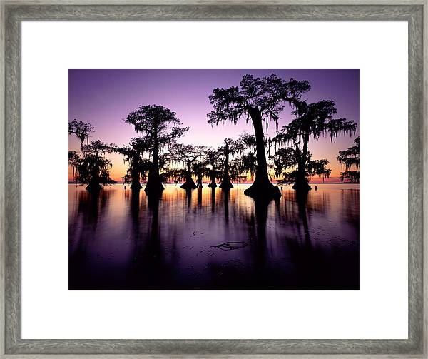 Usa, Louisiana, Swamp Cypress Trees Framed Print