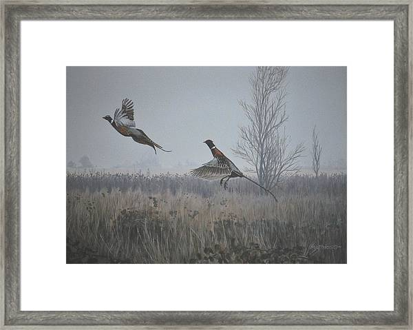 Valley Pheasants Framed Print