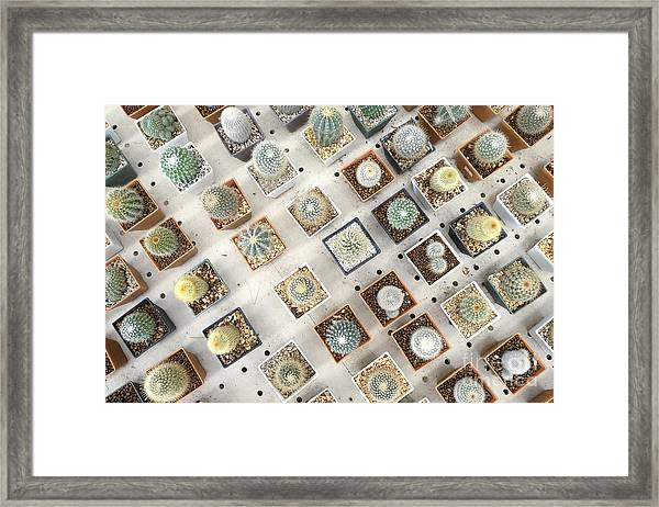 Variety Of Small Beautiful Cactus In Framed Print