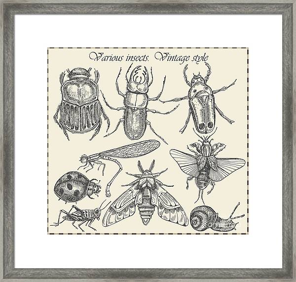 Vector Set Insects In Vintage Style Framed Print