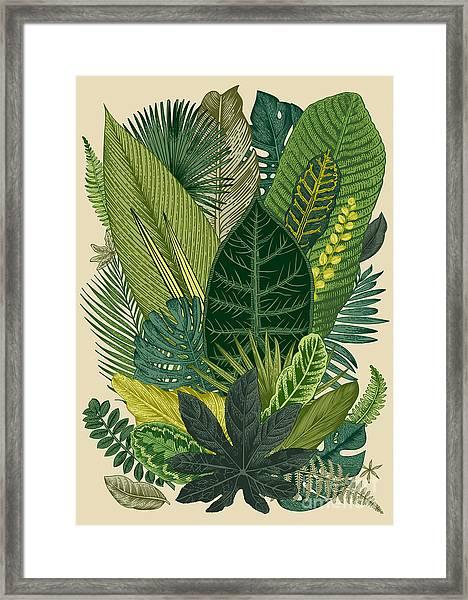 Vector Vintage Composition. Exotic Framed Print
