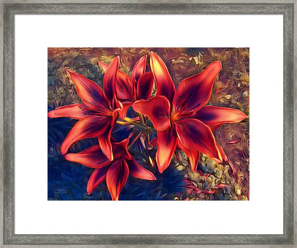 Vibrant Red Lilies Framed Print