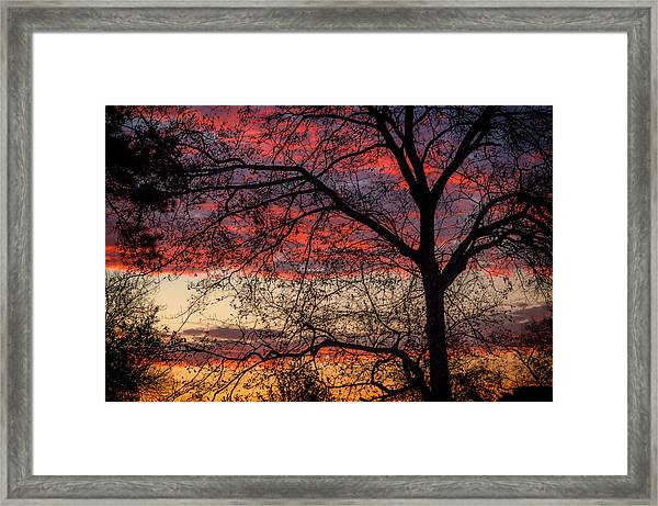 View From The Back Door #1 Framed Print