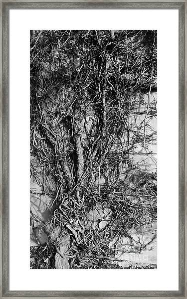 Framed Print featuring the photograph Vine Highway by Jeni Gray
