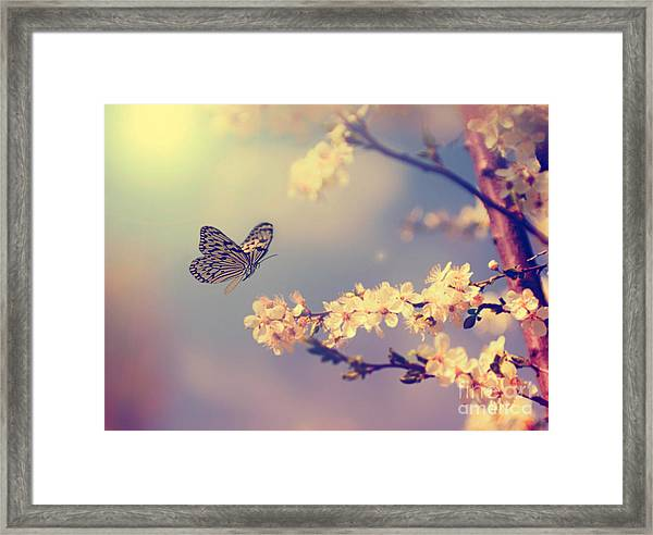 Vintage Butterfly And Cherry Tree Framed Print