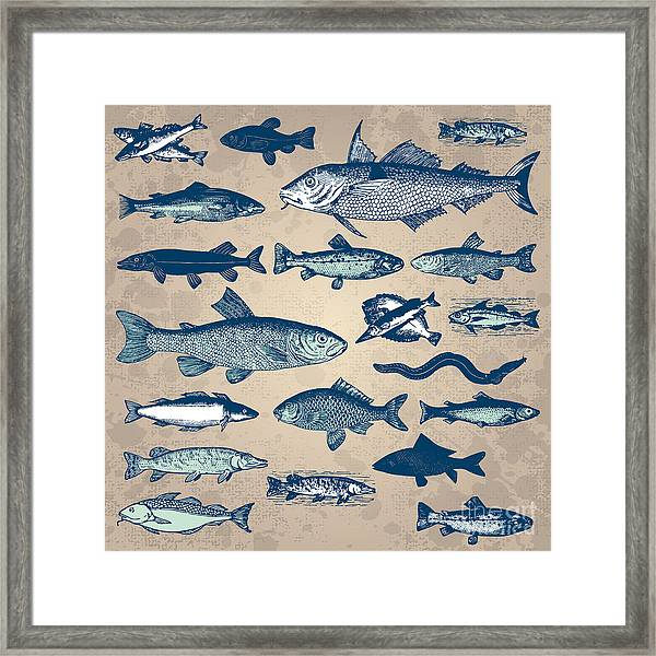 Vintage Fish Drawings Set, Vector Framed Print