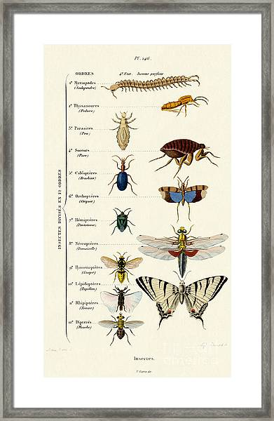 Vintage Insects Print Framed Print