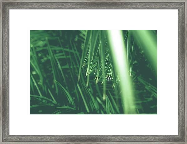 Vintage Palms Iv Framed Print
