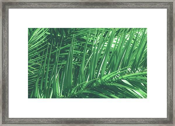Vintage Palms V Framed Print
