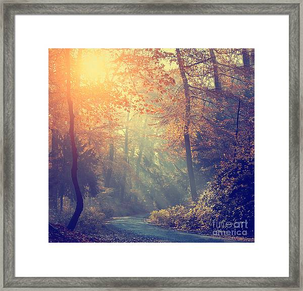Vintage Photo Of Autumn Forest Framed Print by Dark Moon Pictures