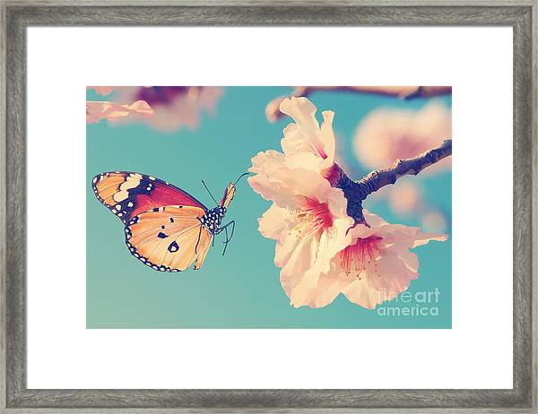 Vintage Spring Image With Butterfly And Framed Print