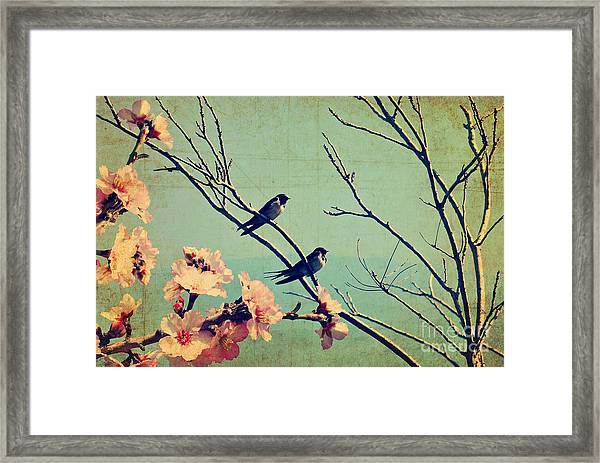 Vintage Spring Image With Swallows And Framed Print