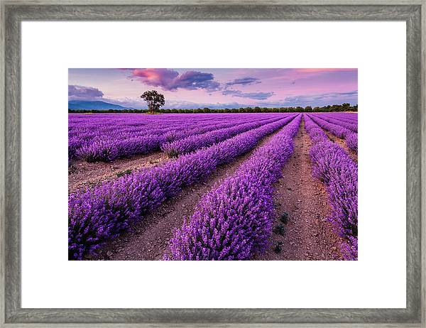 Violet Dreams Framed Print