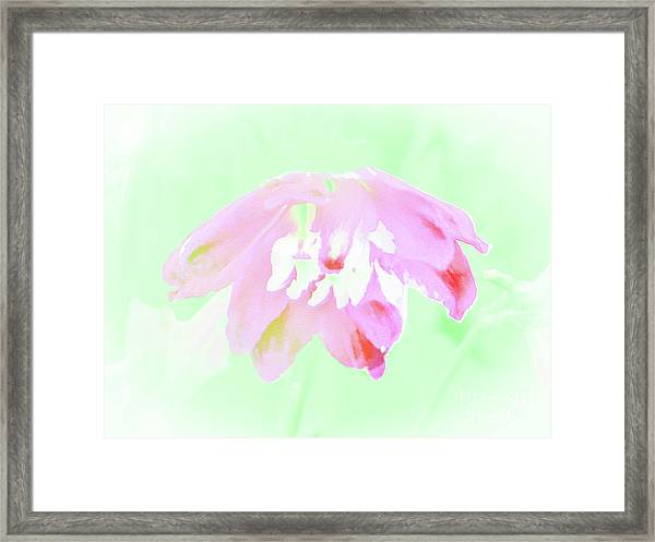 Violet Red Islamic Flora Framed Print